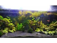 Aquarium 120 litres with fish, plants and all equipment