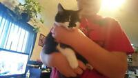 2- 6 month old Female Kittens