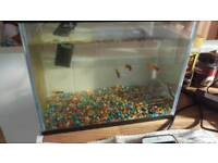 Fish tank with 4 fish and filter