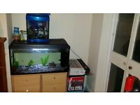 2 fish tanks with everything and more