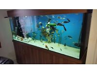 Large fish tank with sump, 7x3x2 (£650)