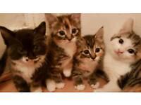 Lovely adorable kittens for sale