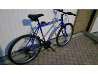 Bicycle: Hype Maxima bike for sale £50.
