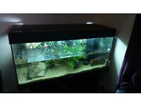 Fish thank For sale