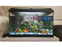 Fish tank set and fishes