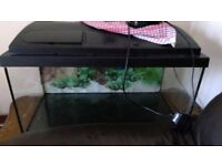 Fish tank, pump filter, gravel and canon (30x30x90cm)
