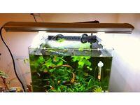 Boyu aquarium light which fits a 1ft-2ft tank.