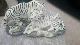 Family white tigers