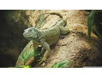Jurassic Reptile Rescue