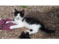 Beautiful friendly kittens for sale