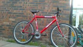 big frame bike