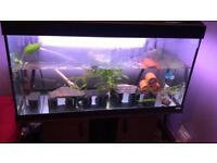 Fish tank for sale l66l128l200l239l46
