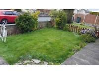 Free turf, grass, conifers, garden plants