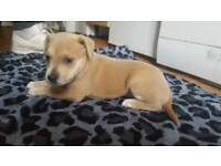 8 week old puppy looking for a forever home