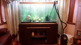 Big Fish tank with fishes for sale