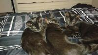 free 4 month old kittens