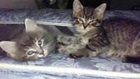 Kittens ready to go good homes