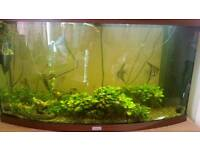 240 Litre Fish Tank with fish