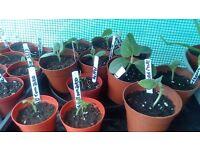 Organic Seedlings, seeds and plants