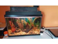 60L aquarium with all equipment heater and filter