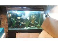 Boyu 350litre Aquarium