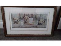 Border terrier pictures