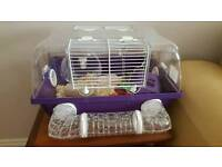 Two dwarf hamsters, cage and accessories