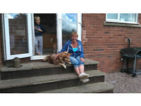 Eat Sleep Play Home Dog Boarding,Doggy Daycare and Dog Walking fully licensed and insured