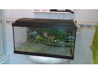 aquarium with hood and light