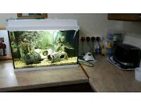 Jewel 70ltre fishtank.