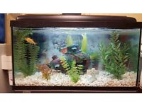 2 Foot Fish Tank and Stand
