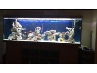 Large fish tank/aquarium