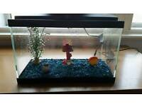 Small (25l) fish tank with accessories
