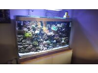 Live rock.coral and fish for sale