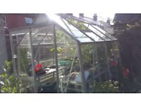 FREE 6 x 8ft glass Greenhouse, comes with auto window opener and built in shelves along both sides