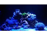 30kg Live Rock and Various Corals - ono