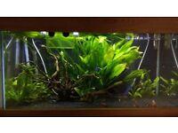 Assorted live aquarium plants