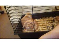 2 lovely female rabbits 6 mounths with cage
