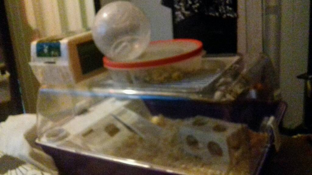 Hamster & Cage & sawdust & ball & Food