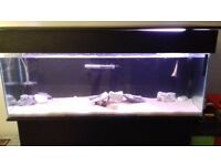 4 foot fishtank with black cabinet