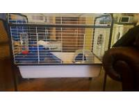 2x Guinea pigs + large cage and stand