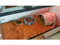 Two bearded dragons for sale and tank setup