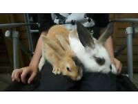 Baby rabbits 4 girls left