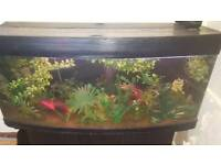 5 foot bow front tank with matching stand