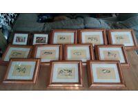 framed dog art pictures.