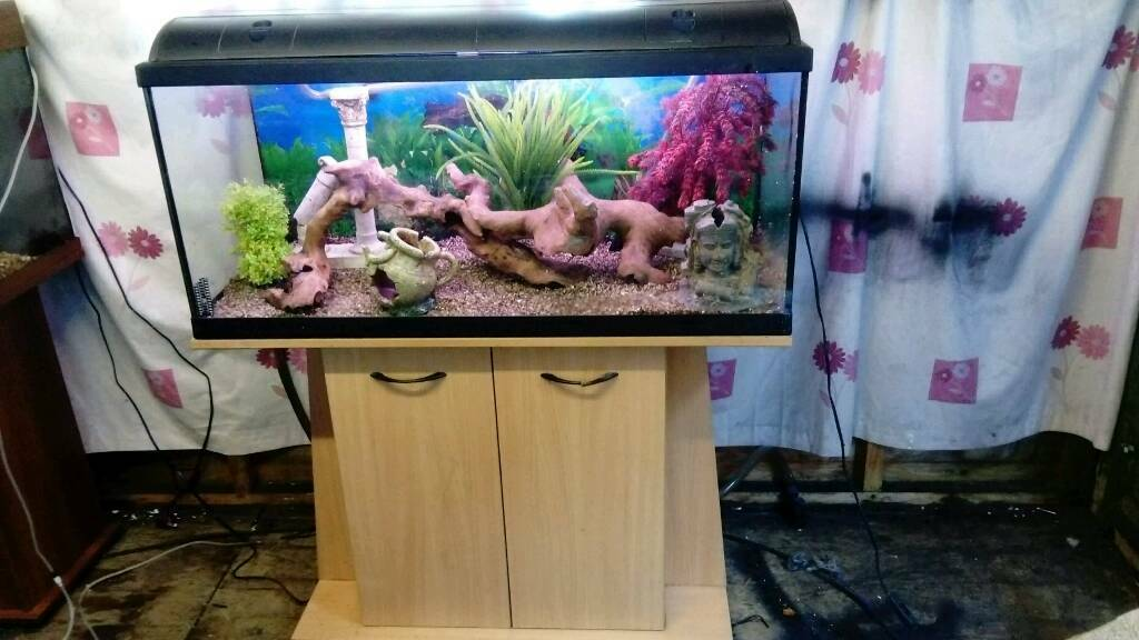 "39"" FISHTANK WITH CABINET PLUS EXTERNAL FILTER IN GOOD CONDITION"
