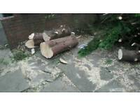 Free logs and branches to clear