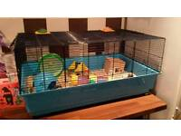 Dwarf hamster and large cage with lots of extras