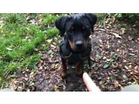 **AMAZING 6 MONTH OLD PUPPY**