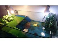 Custom Aquarium Fish/Turtle Tank